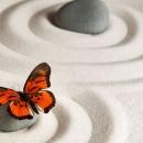 Stress coaching og chok-traume terapi v/ Ekspert Heidie Graversen